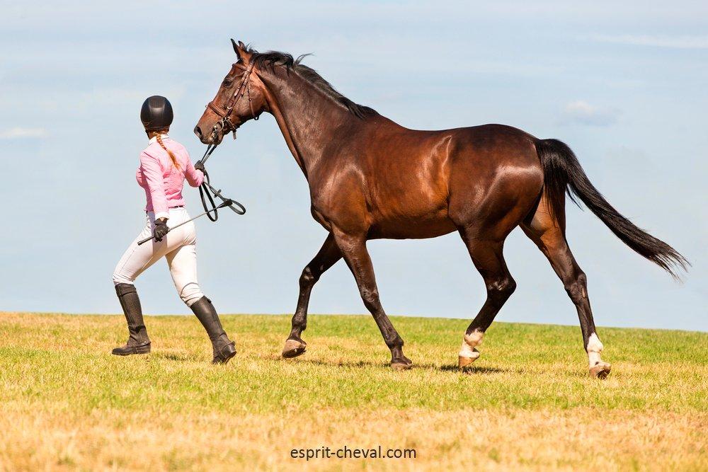 Le choix entre des licols détachables ou non dépend largement de votre cheval