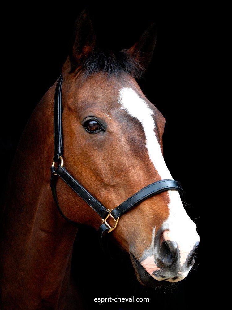 Le licol est probablement la pièce d'équipement la plus fréquemment utilisée dans votre écurie, vous devez donc en choisir un qui facilite vos interactions quotidiennes avec votre cheval :