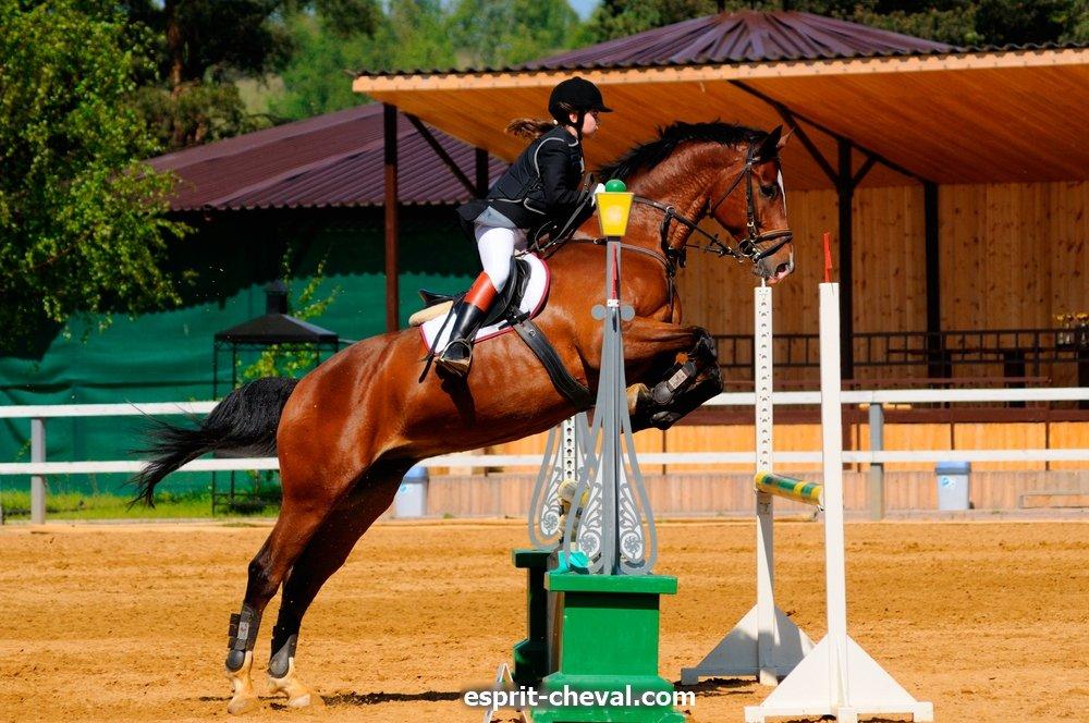 Les disciplines équestres comme le saut ou CSO.jpg