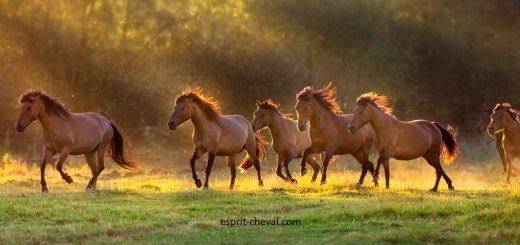 Mettre son cheval au pré