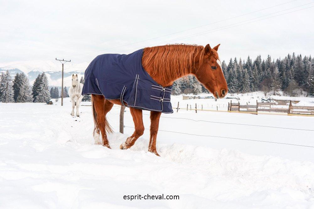 Quelle couverture en hiver pour mon cheval au pré