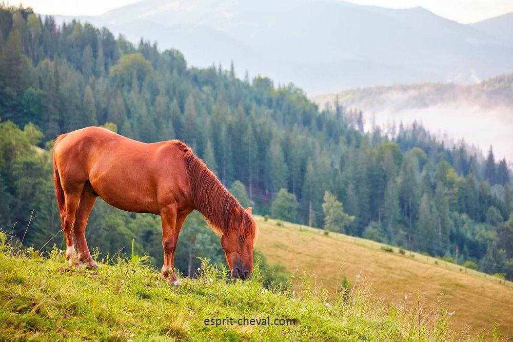 Un cheval en train de brouter dans un pré