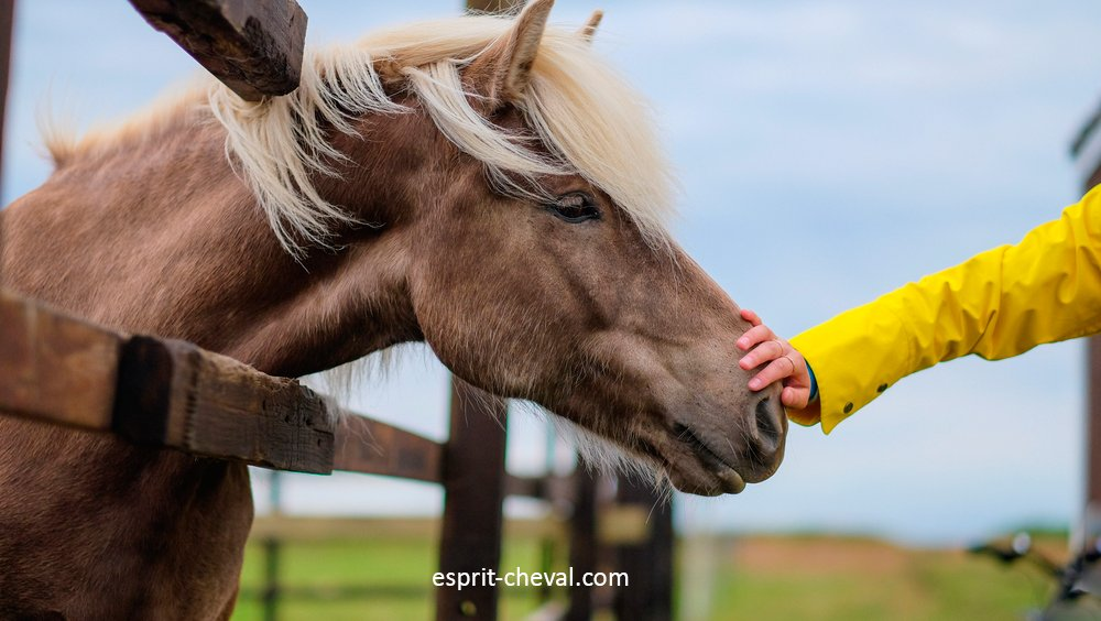 Une personne en train de caresser la tête d'un cheval