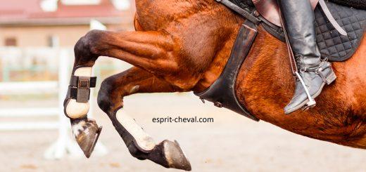 l'entorse du cheval